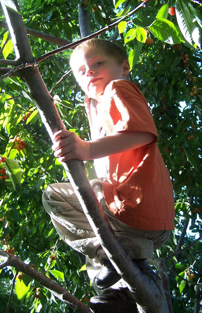 treeclimbertucker.jpg